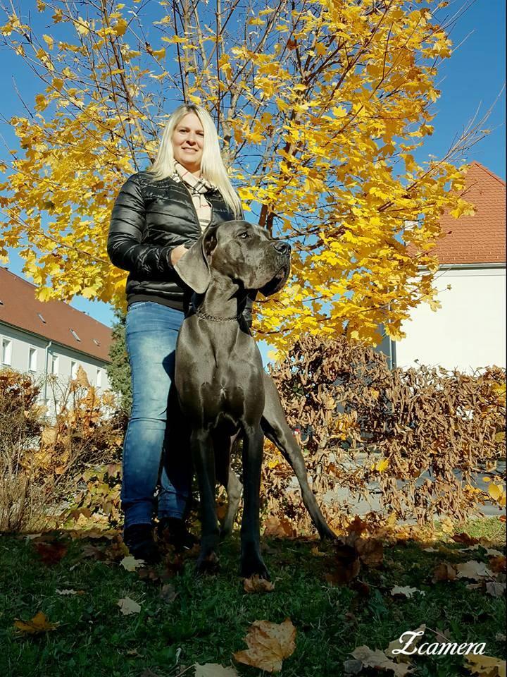 deutsche Dogge blau