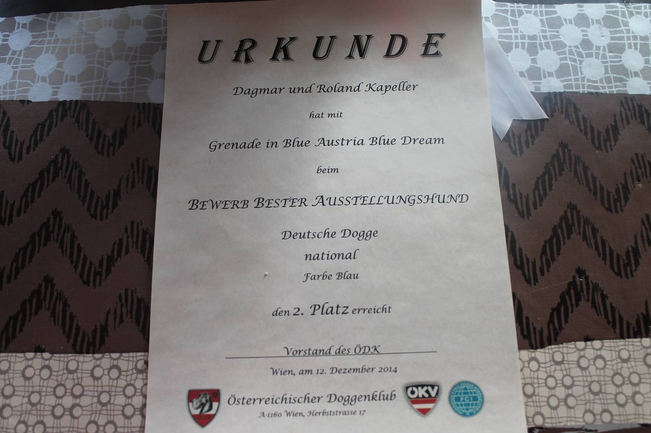 Austria Blue Dream Urkunde