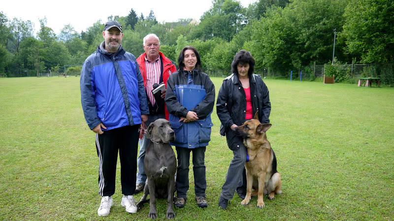 Hundeschule mit Dogge