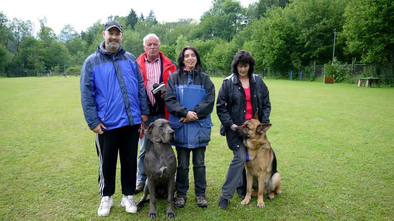 Hundeschule mit Dogge Zuchtsätte - Austria Blue Dream Deutsche Doggen