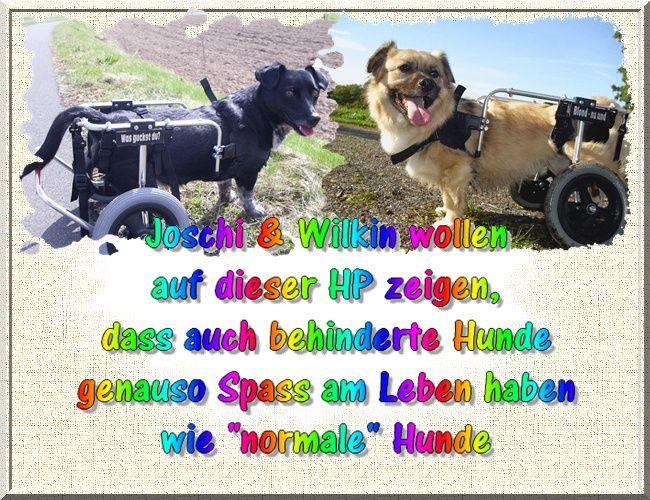 Rolli-Hunde,joschi & Wilkin