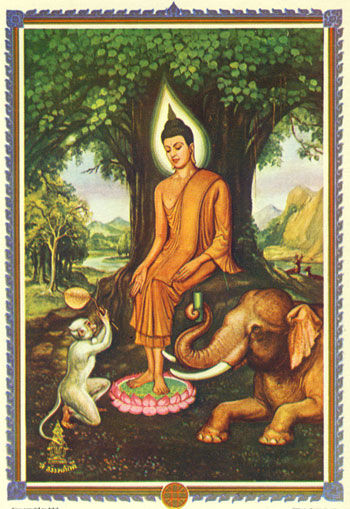 Mittwochs-Buddha Nachmittag
