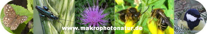 Makrophotonatur - Natur in Makroansicht