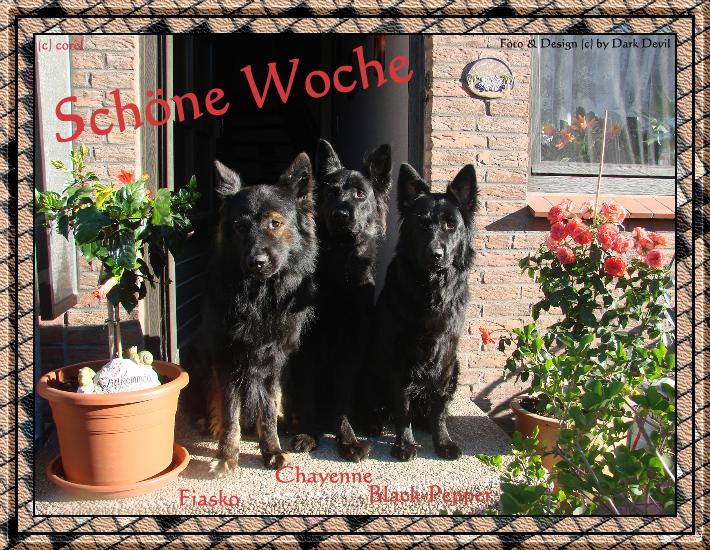 An den Beitrag angehängtes Bild: http://file1.npage.de/004886/15/bilder/gbschoene_woche.png