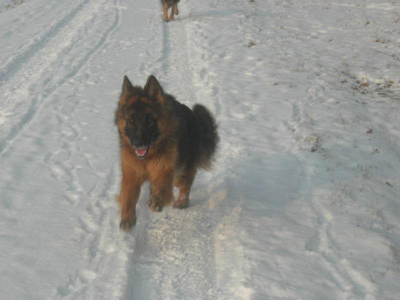 Wendy liebt Schnee !!!