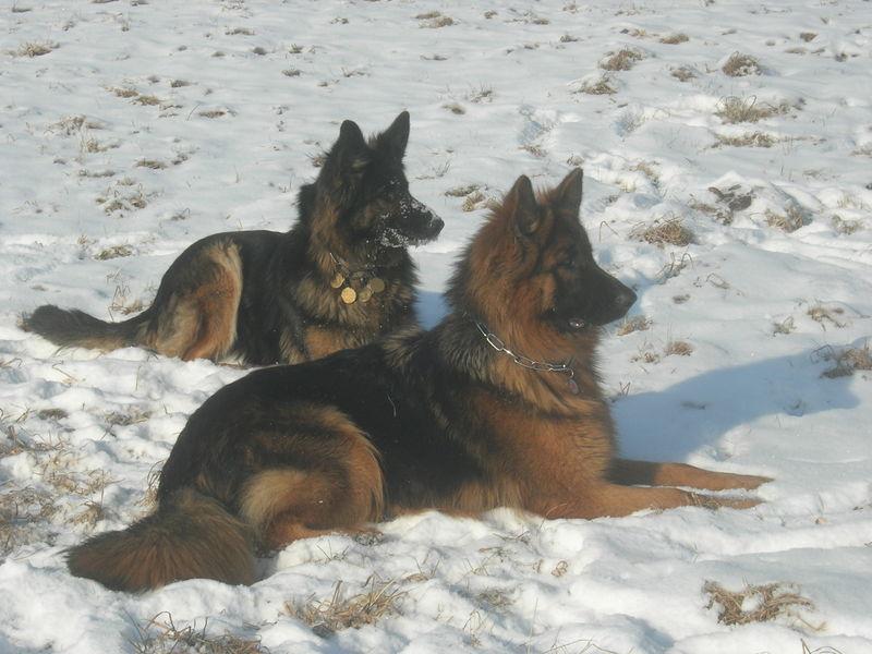 Unsere Mädls: AKIRA & WENDY