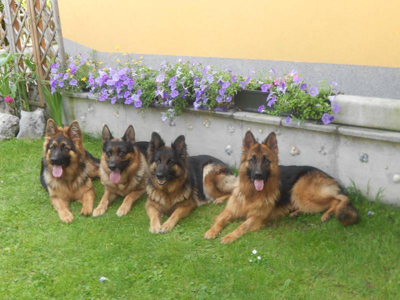 Juli 2012: Berny,Carlos,Akira,Wendy