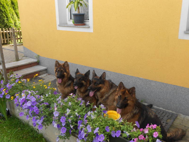 Berny,Akira,Carlos,Wendy
