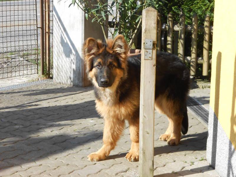 Großer Berny (5 1/2 Monate),jetzt stehen auch die Ohren !!!