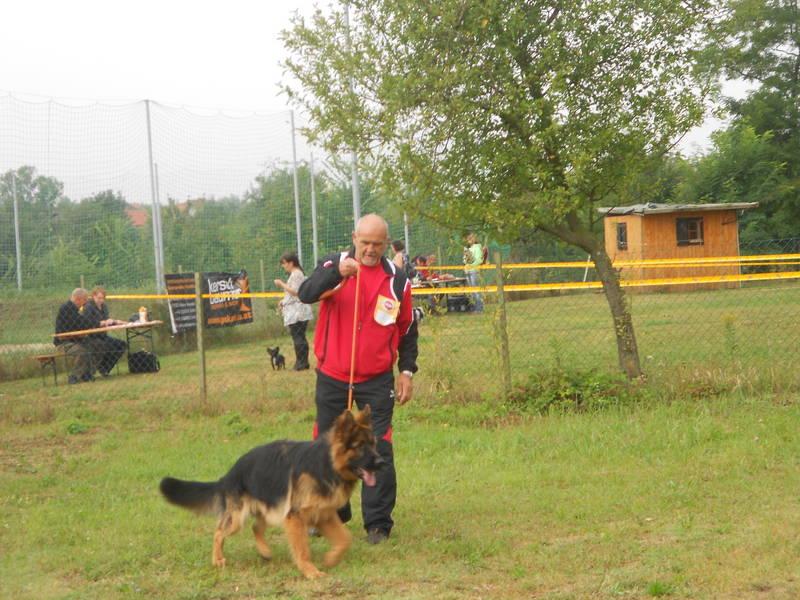 2.9.2012 Ausstellung in Auersthal: Berny von der Mattig,Jugendsieger !!!