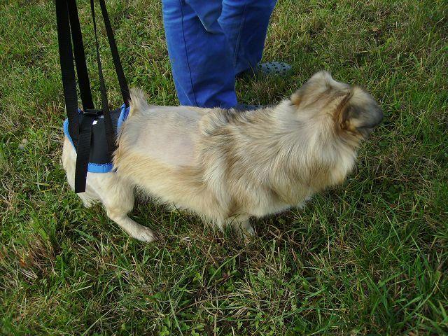 Gehhilfe,behinderter Hund