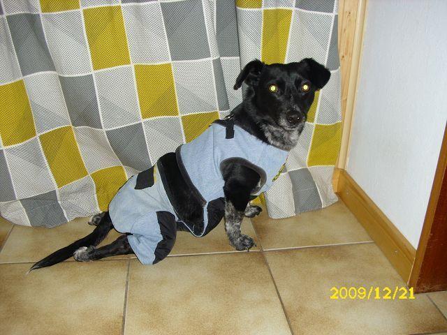 Rutschhose,Handicap-Hund