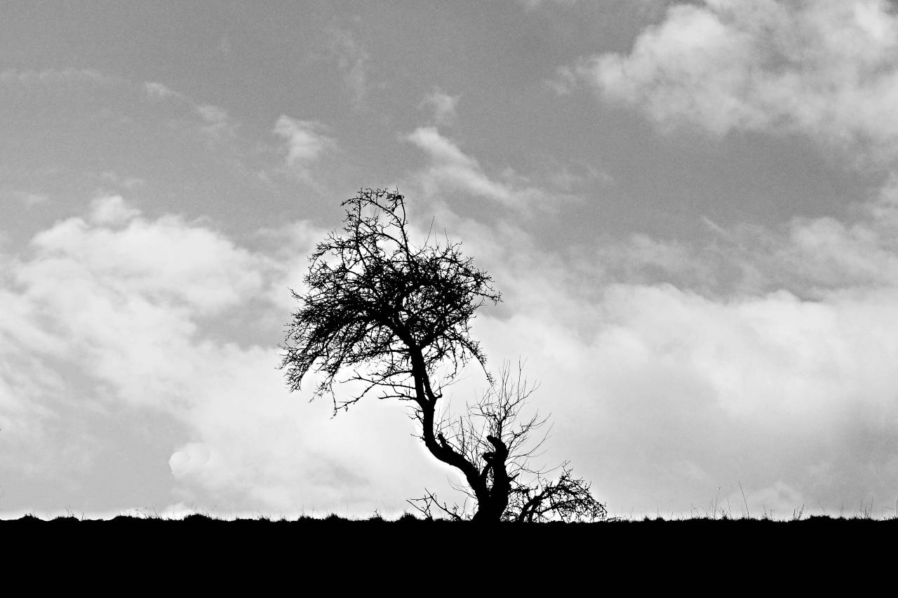 Baum Tree sw Solingen NRW Germany alone