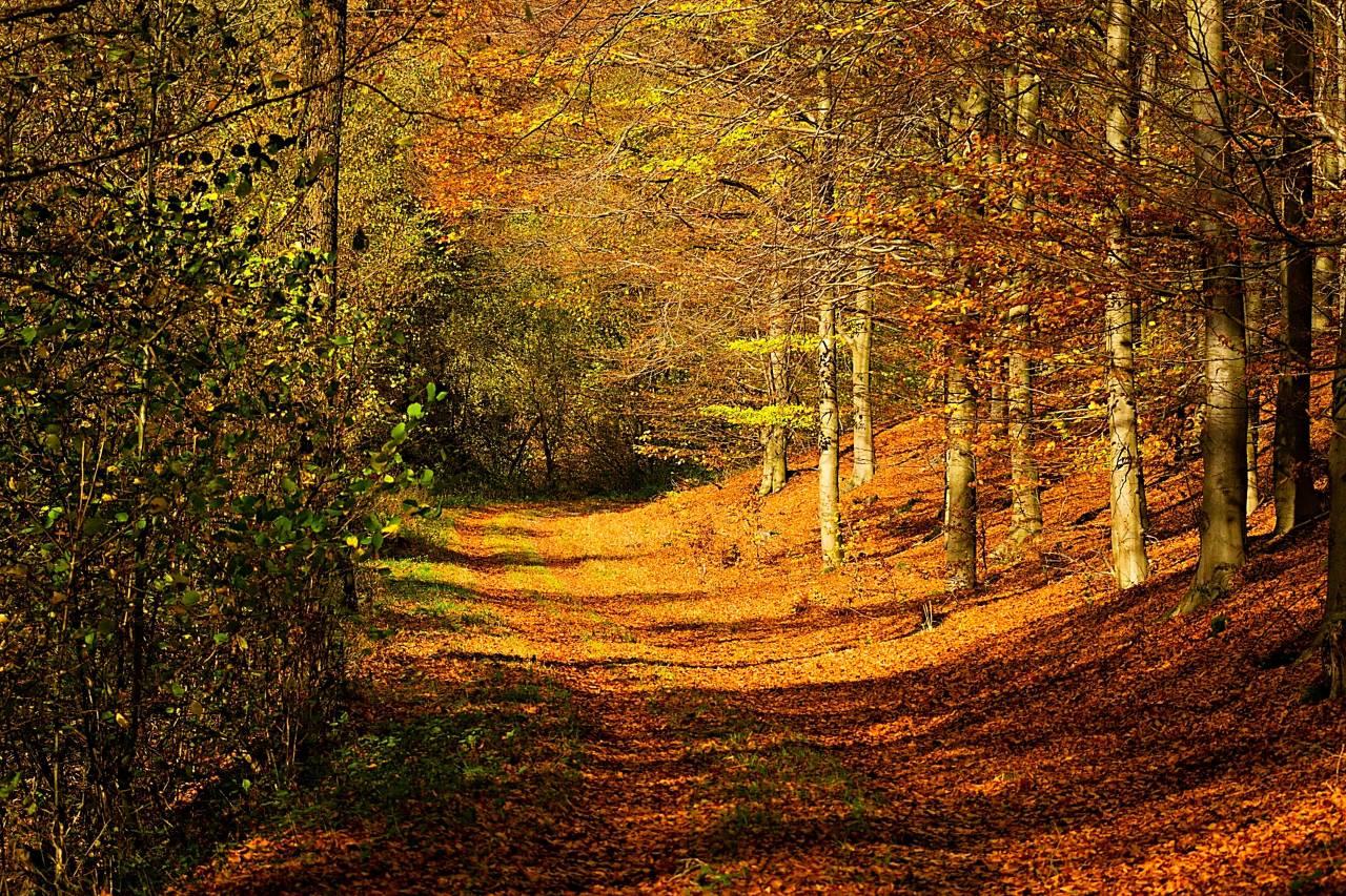 Solingen, Wald, Forrest, NRW, Germany, Ittertal, Herbst, Autumn, Farbe