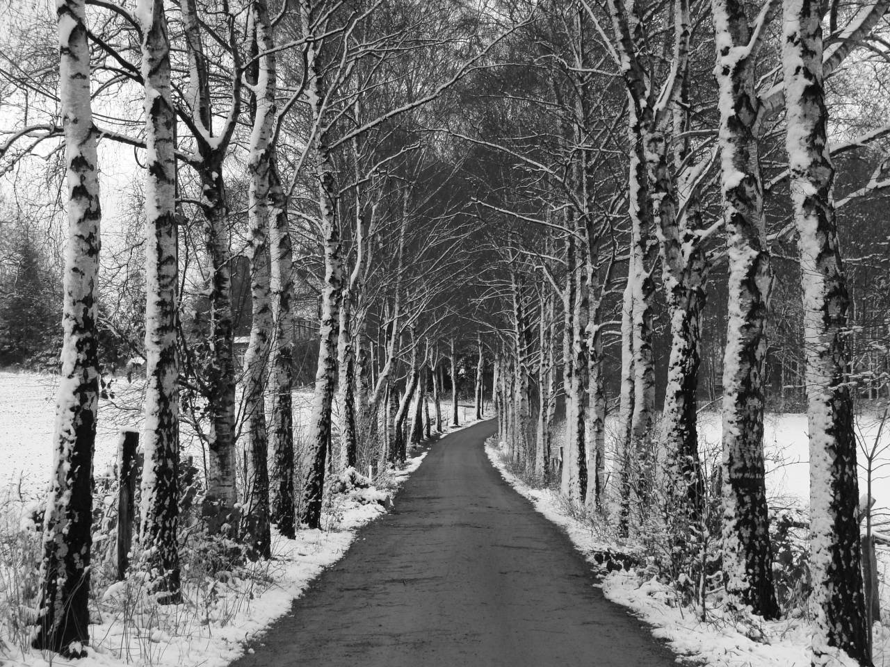 SW autumn Winter cold Picture Allee Birken Schnee Solingen Gräfrath
