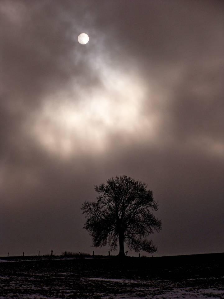 Winter Cold Sun Tree Baum