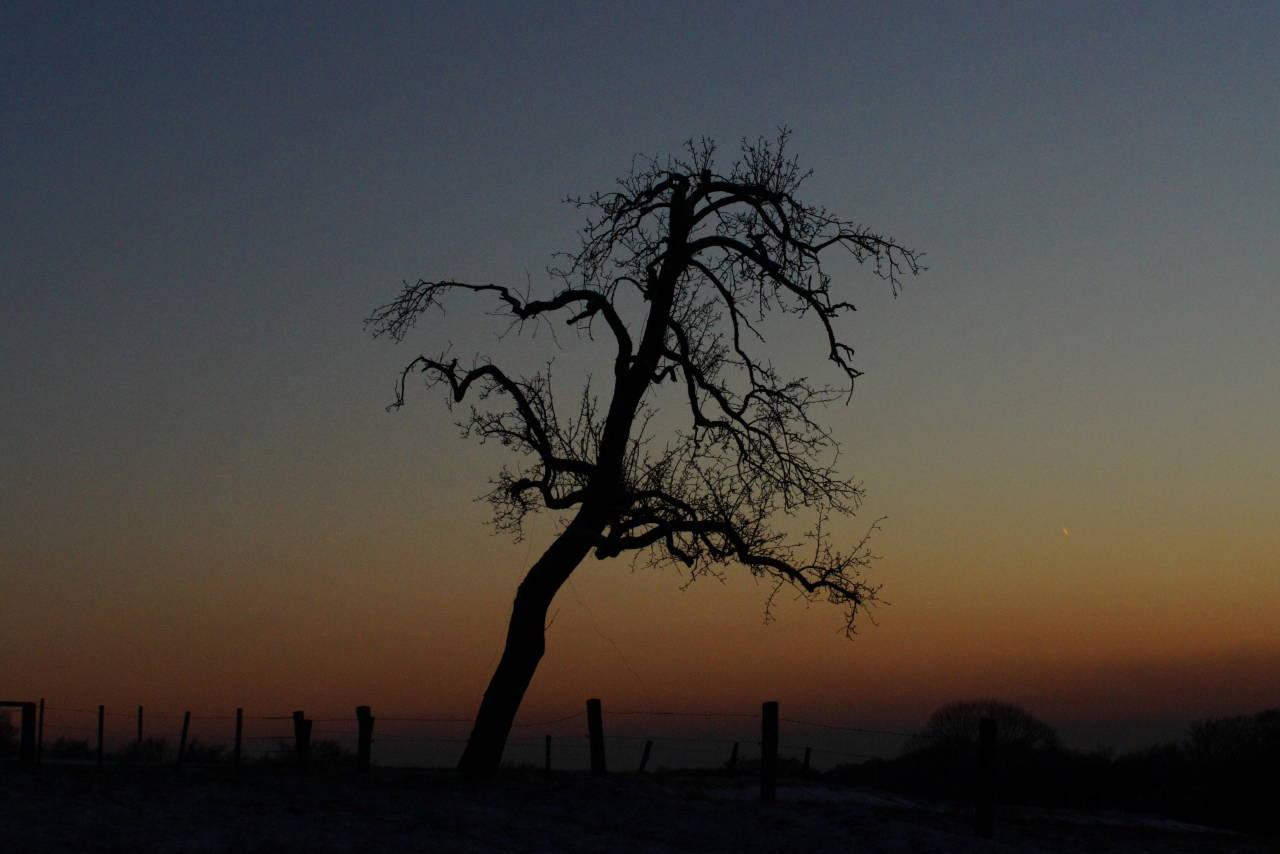 Baum alt Birnenbaum Sunset Winter cold
