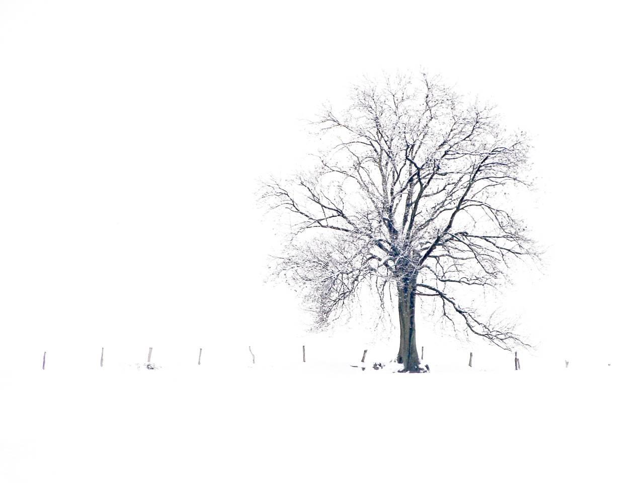 Winter, Schnee, NRW, Geramany, Art