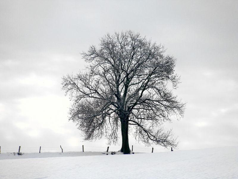 verschiedene Fotos aus dem Winter