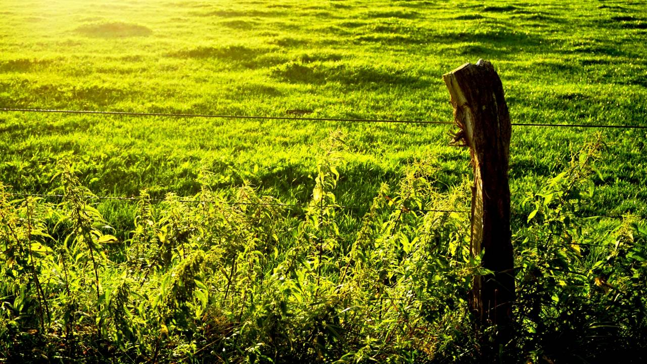 Pfosten Wiese grün Zaun Draht