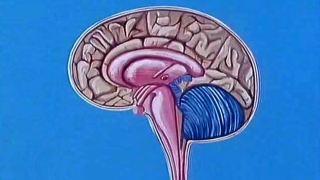 9. Denk mal...! - das Gehirn