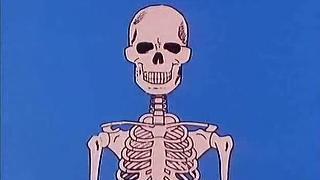 19. Stabil und doch beweglich - Knochen und Skelett