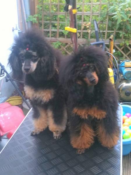 Tahmi und Cleo