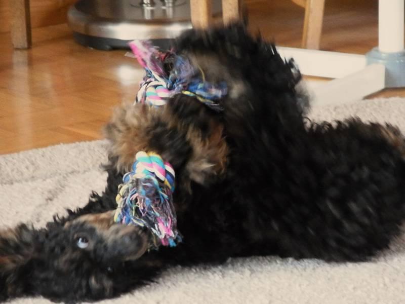 Minu und ihr Spieltau