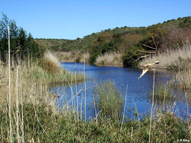 Lagune in der Wilderness Section des Garden Route Nationalparks