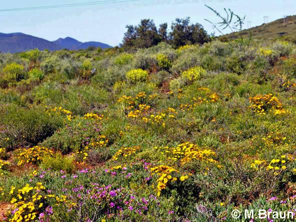Blühende Landschaft in Richtung Westküste