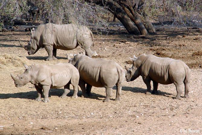 Nashörner am Wasserloch der Epako Lodge