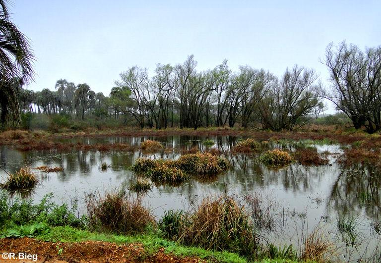 Typische Landschaft im El Palmar NP