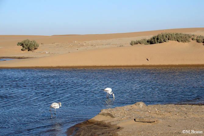 In der Lagune lassen sich zahlreiche Vögel beobachten