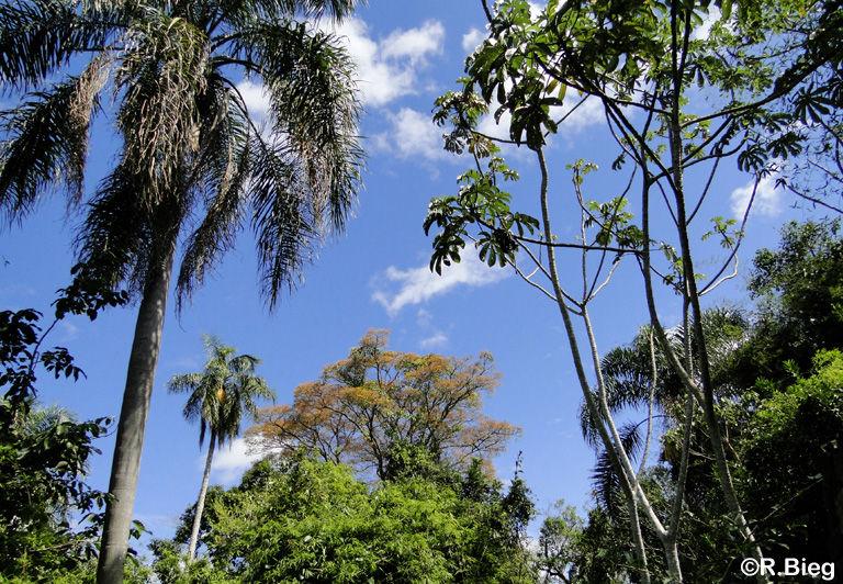 Der Wald von Iguazú