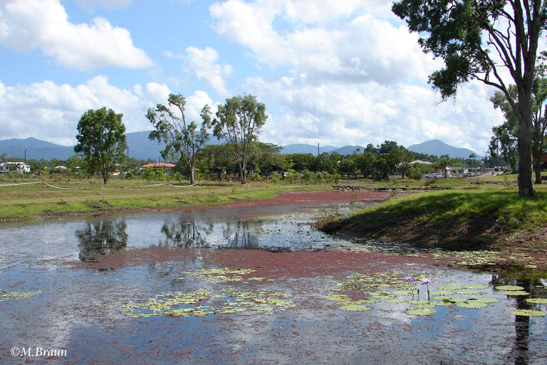Am Stadteingang von Ingham liegen die Tyto Wetlands