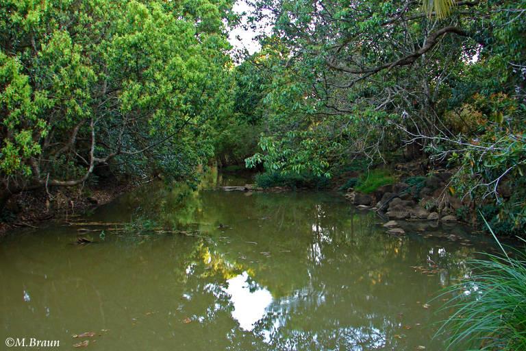 Am Ortseingang von Yungaburra kann man in diesem Fluß abends die Schnabeltiere beobachten