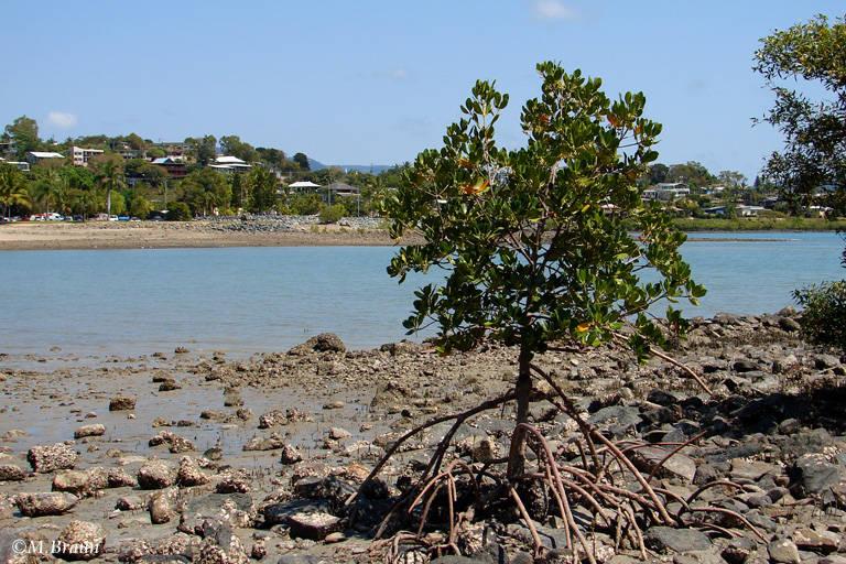 Küste von Airlie Beach