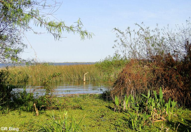 Die Laguna