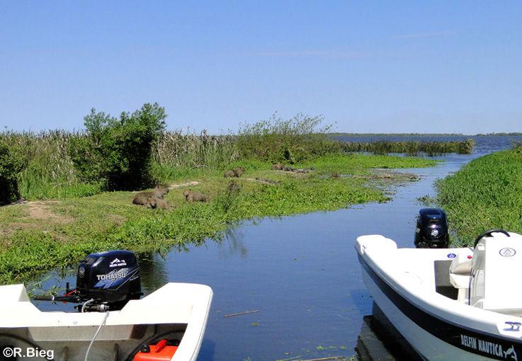 Am Bootssteg - schon hier liegen Kaimane und Wasserschweine
