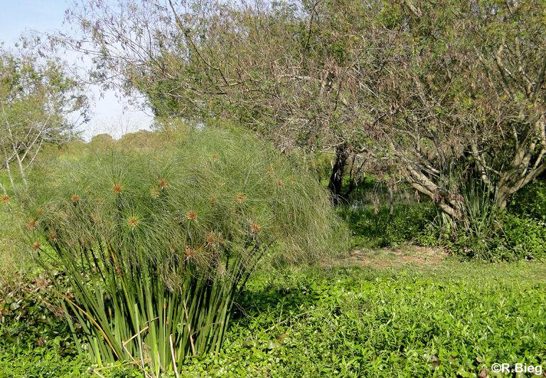 Die Vegetation an der Lodge