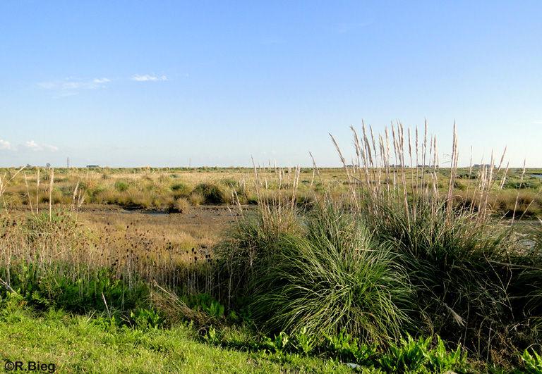 Die Landschaft in Punta Rasa
