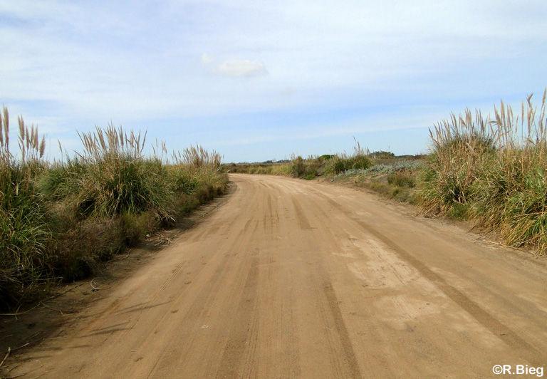 Die Piste in dem kleinen Naturschutzgebiet Punta Rasa