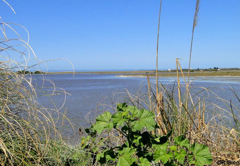 An der Küste nördlich von Mar Chiquita