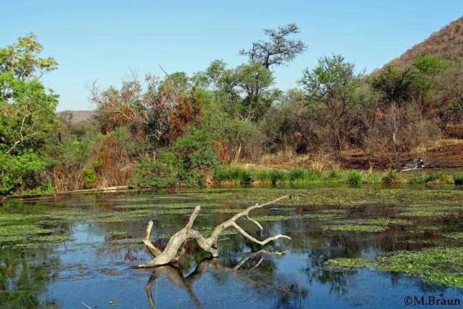 Ein kleiner See im Reserve