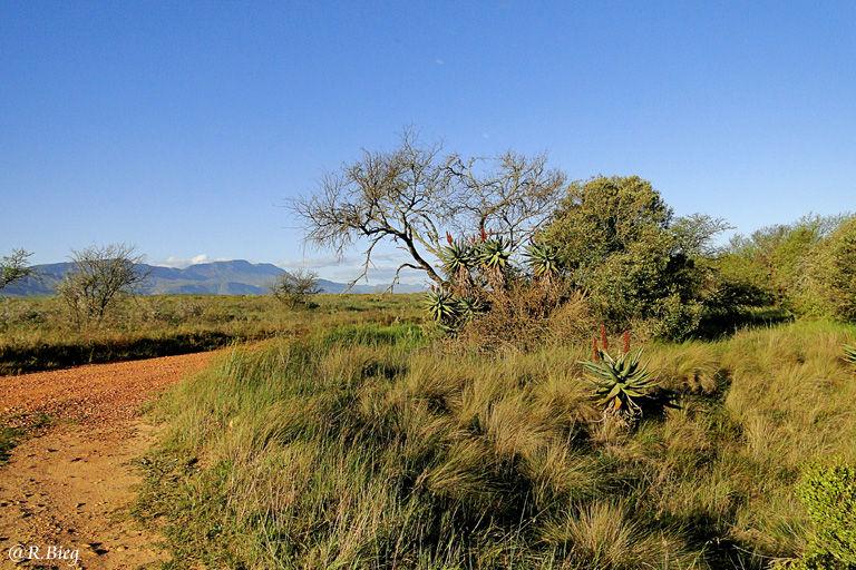 Landschaft im Bontebok NP, nahe Swellendam