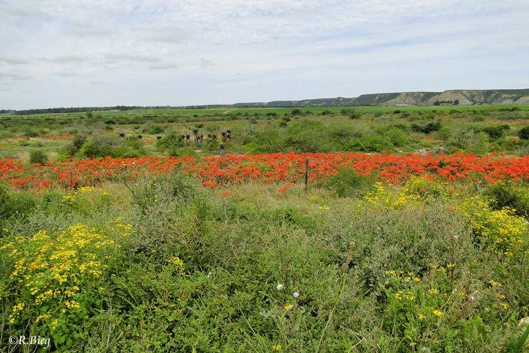 Landschaft kurz vor dem Ort Addo