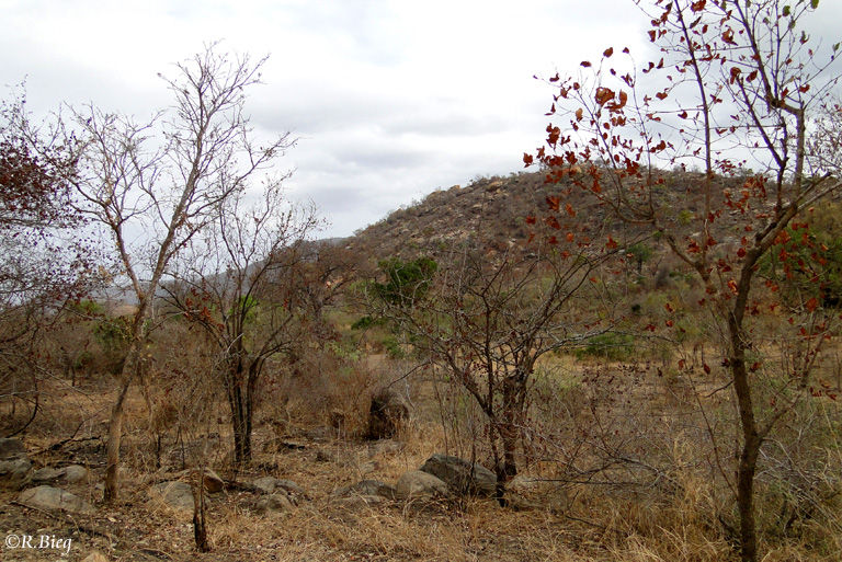 Vertrocknete Landschaft im Krüger Nationalpark