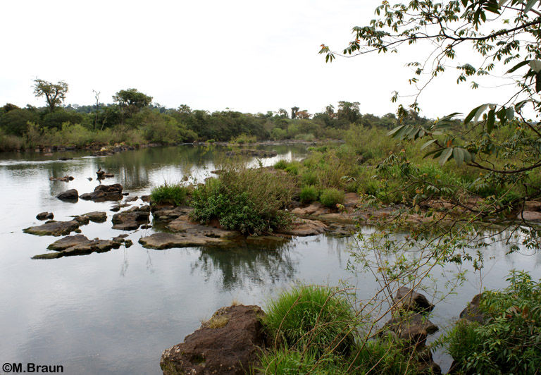 Hier fließt der Iguazú noch ruhig und träge...