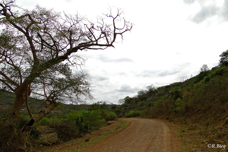 Das Mkhuze Game Reserve