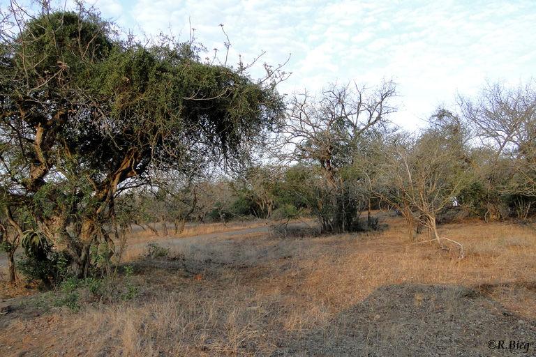Auch in diesem Reserve ist die Landschaft ziemlich vertrocknet